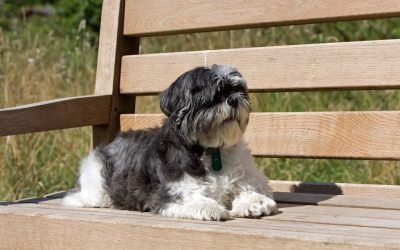 6 Common Small Dog Breed Health Issues to Be Aware Of